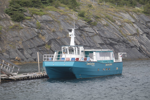 The Bonne Bay Breeze