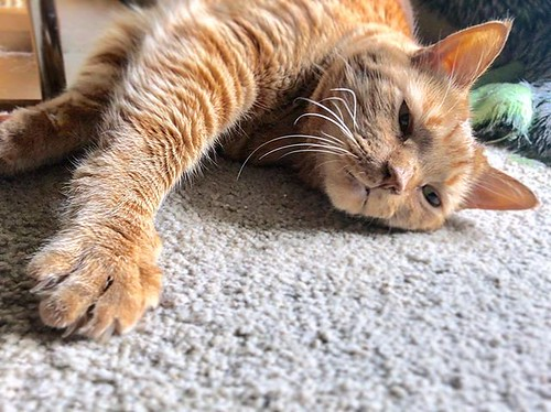 Ugh 😑 the heat. I'm sleeping all day! Oh wait! I do that anyways! 😸