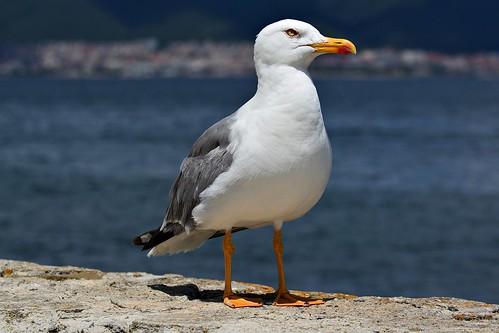 Seagull on the Sunny Beach