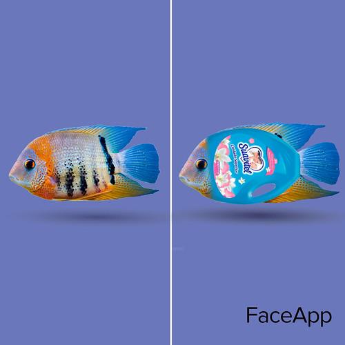 suavitel-faceapp