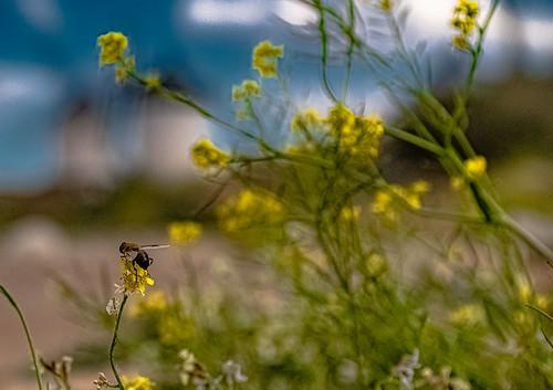 Flora and Fauna in the Windmills of Consuegra .., Flora y Fauna en los Molinos de Consuegra...