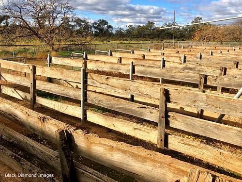Yanga Station Woolshed, Yanga National Park, Balranald, South West, NSW