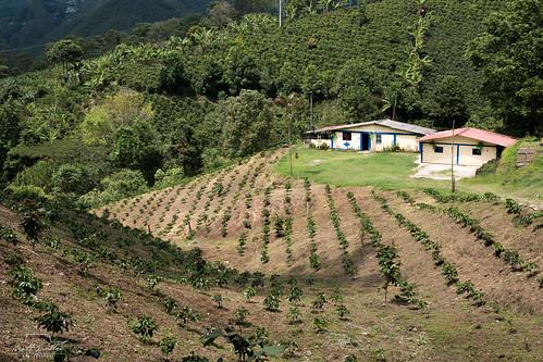 Colombian Finca