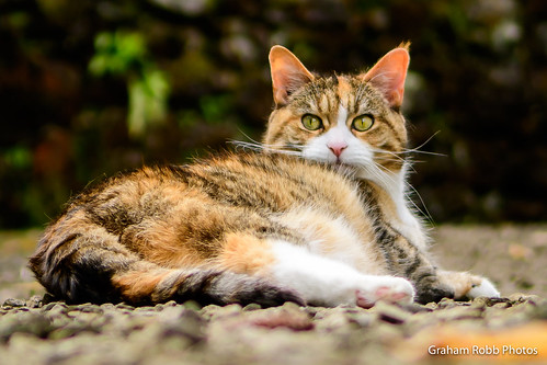 Miko on the gravel