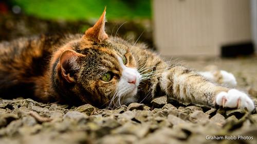 Miko on the gravel-4