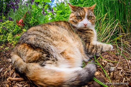 Miko in the herb garden