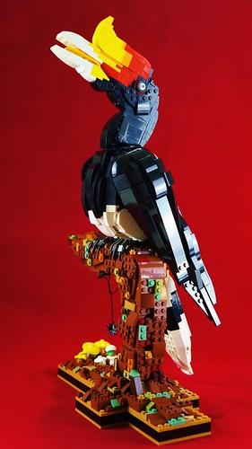 Female Rhinoceros Hornbill (Long neck version)