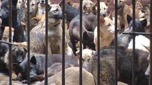 Vietnam - Hoian - Dog Cage - 2