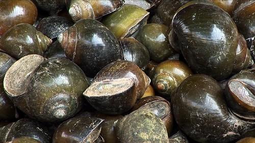 Vietnam - Hanoi - Market - Snails - 117