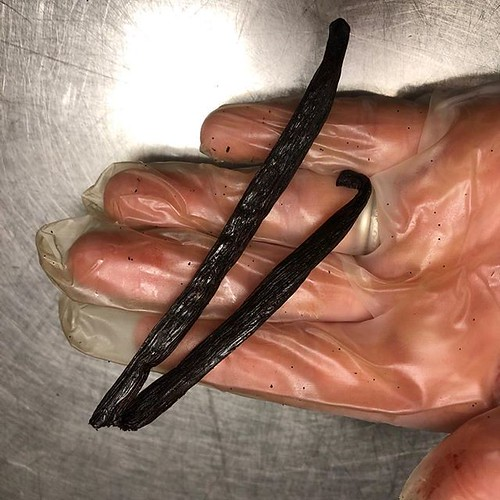 #casualty #brokenvanillabeans There's a reason we hand pack and inspect all our vanilla beans! This vanilla bean was aromatic, supple, and just perfect. Except that it got snapped somewhere in its travels from #Madagascar. Is it still fine to use? #Yup. I