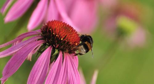 Bee-autiful on a flower