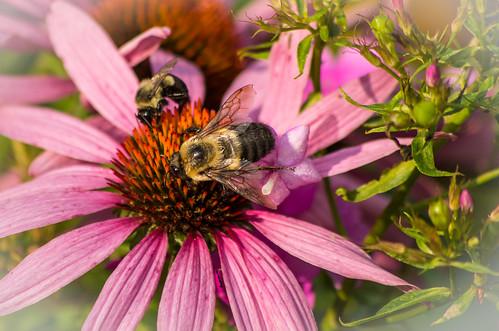 Bee-autiful!