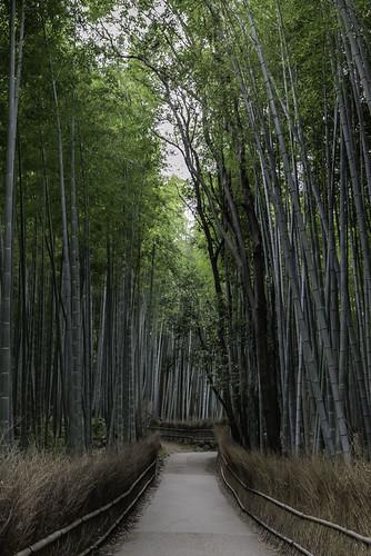 Bambu forest in Arashiama, North-west of Kyoto