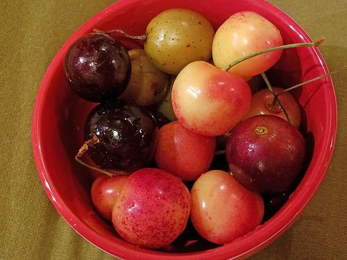 purple muscadine grapes, scuppernong grapes, Rainier cherries