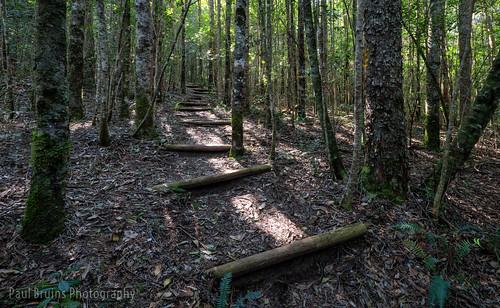 Elephant Walk 1 - Natural Forest