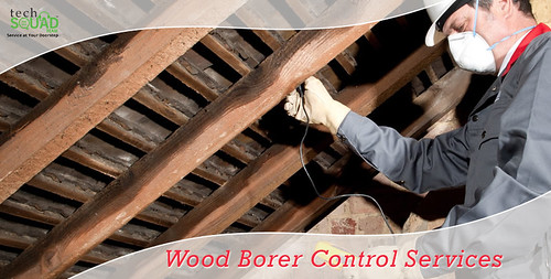 Wood Borer Pest Control Services in Bangalore