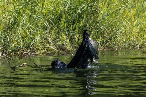 Snorkelling fisherman.