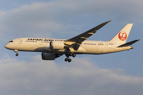 Japan Airlines   JA830J