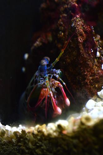 National Aquarium   2019.08.16 DSC_0213