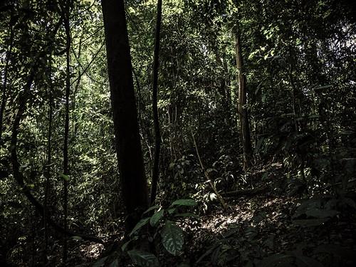 Singapore Botanical Transient