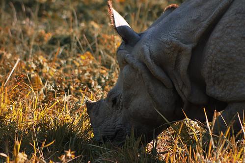 Nepal lov