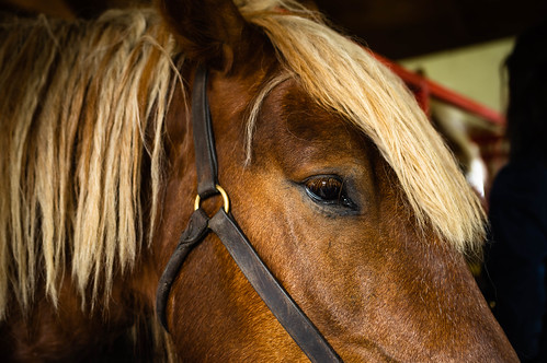 Close up on a horse's eye
