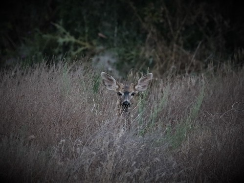I scared the young buck, most likely her son.
