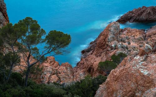 The blue bay -  Die blaue Buche