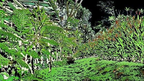 Malaysia - Kuala Lumpur - National Orchid Garden - 24ee
