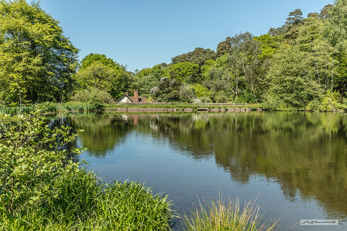 """Looking north across the """"Hammer-Pond"""" at Friday Street, Leith Hill, Surrey."""