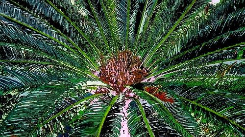 Malaysia - Kuala Lumpur - National Orchid Garden - 37ee