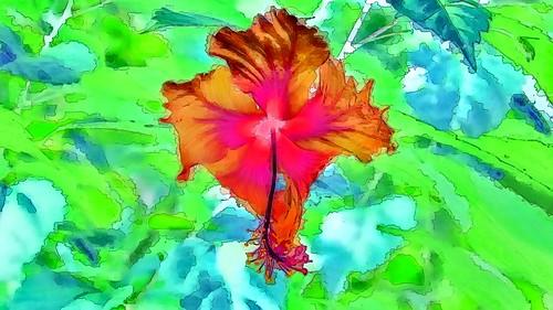 Malaysia - Kuala Lumpur - National Orchid Garden - Hibiscus - 74gg