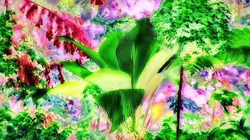 Malaysia - Kuala Lumpur - National Orchid Garden - 73gg