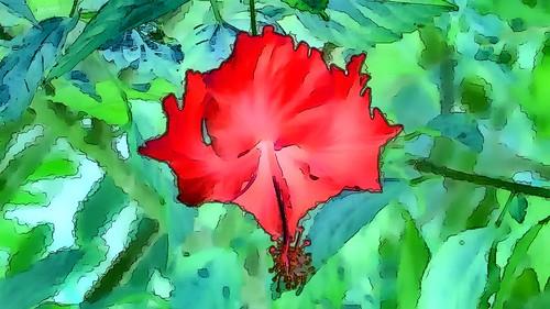 Malaysia - Kuala Lumpur - National Orchid Garden - Hibiscus - 78gg