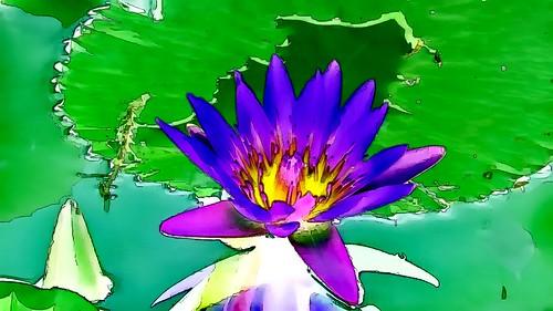 Malaysia - Kuala Lumpur - National Orchid Garden - Blue Lotus - 8gg