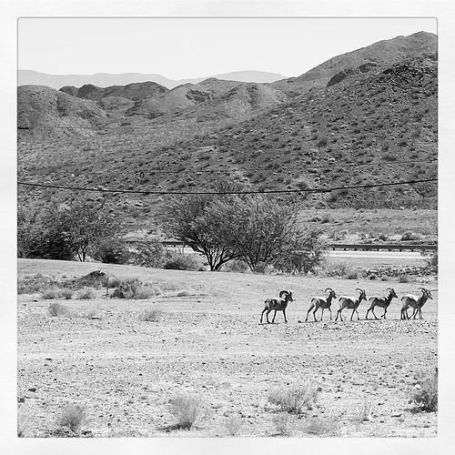 ... still Nevada ...