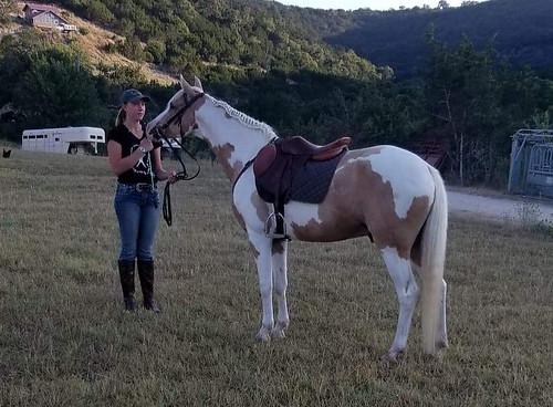 13 Year old Sport Pony Gelding