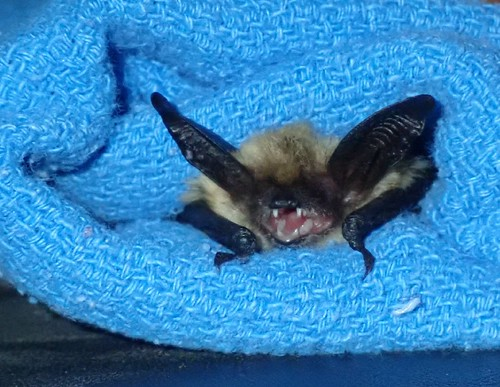 Bat research in southern Oregon