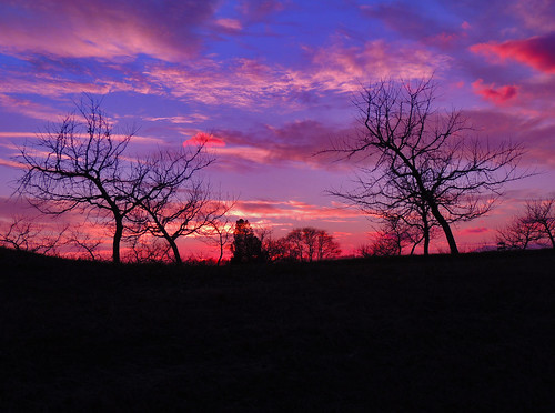 Pinks Clouds over the Orchard