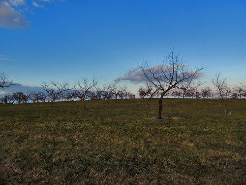 Sherfy's Peach Orchard