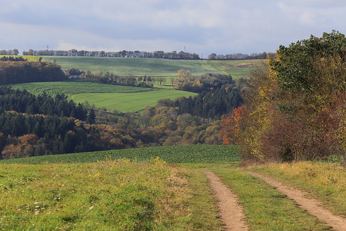 Germany / Rhineland-Palatinate - Moselle Valley