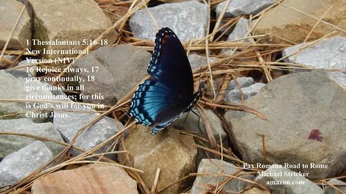 Butterfly 1 Thessalonians 5:16-18 New International Version (NIV)