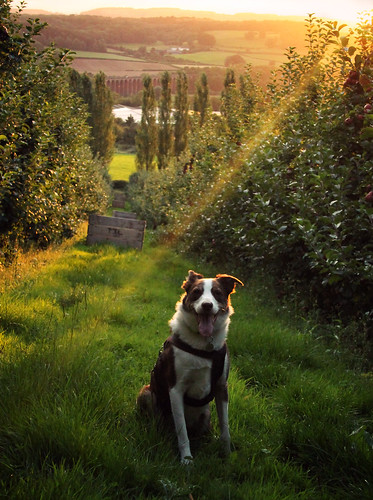 37/52 Evening in the Orchards