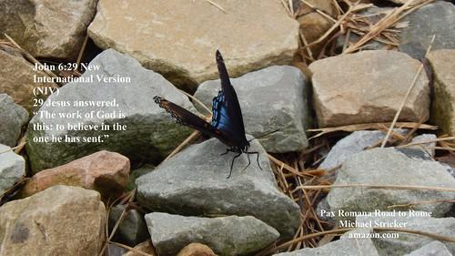 Butterfly John 6:29 New International Version (NIV)