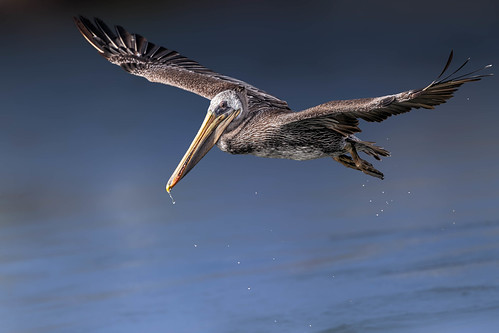 Full Frame Flight Shot