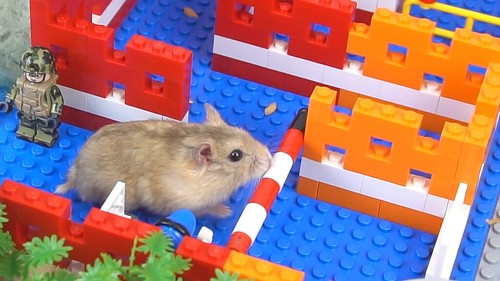 Magic Lego - Maze Labyrinth for Hamster Pet - Can they Exit?