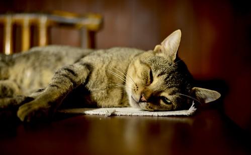 sleepy one-eye