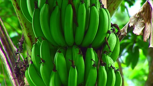 Indonesia - Sulawesi - Tanah Toraja - Banana - 313