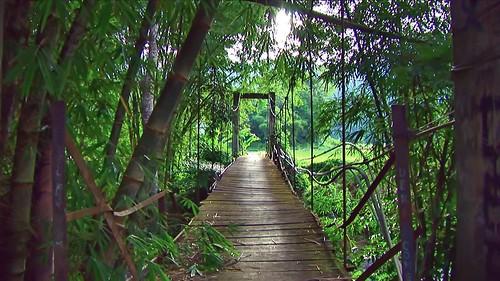 Indonesia - Sulawesi - Tanah Toraja - 323
