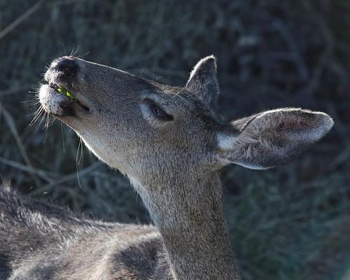 Oh deer, is there something in my teeth